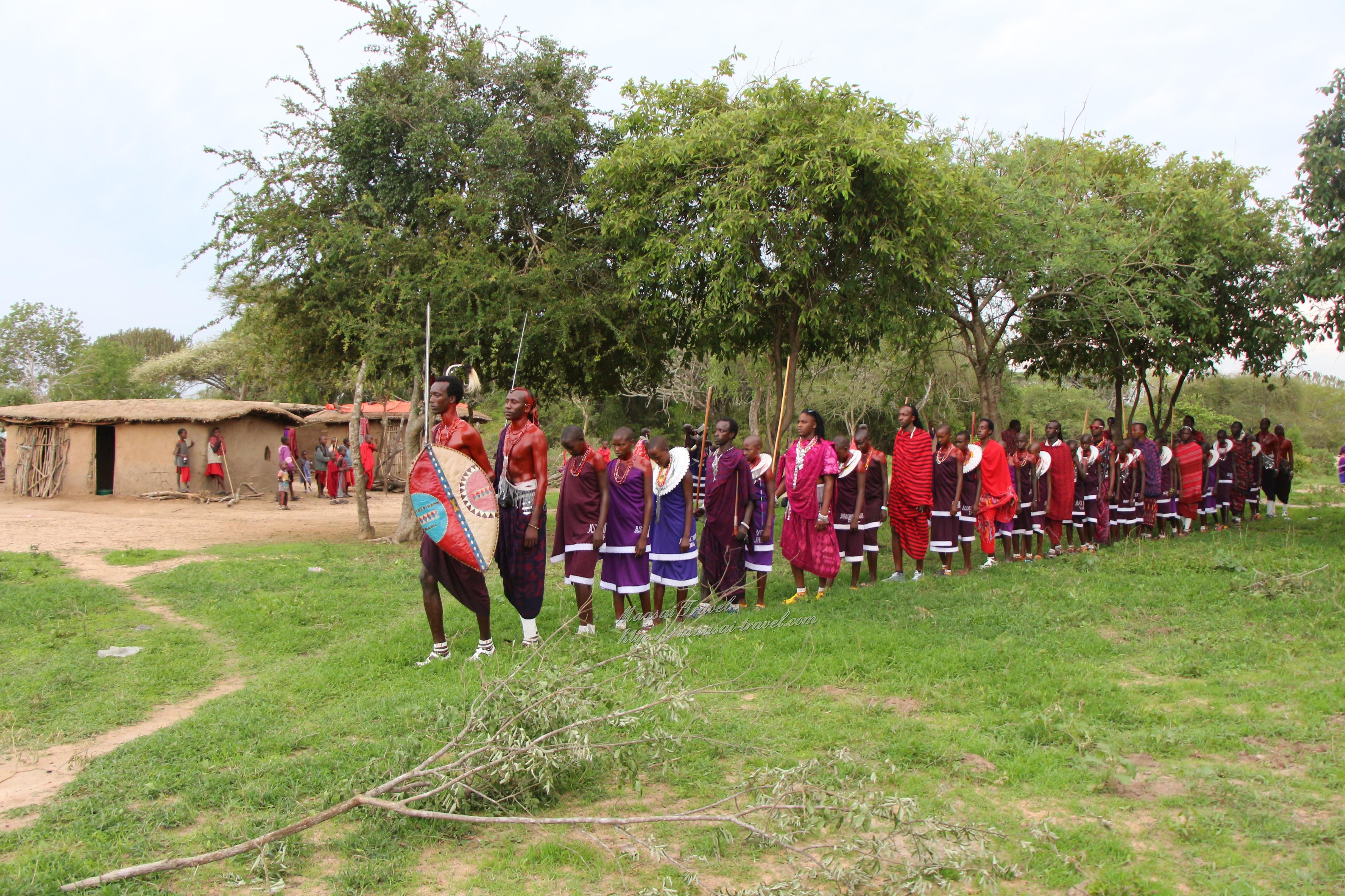 Guerrieri Maasai si avvicinano al recinto dando inizio alla cerimonia