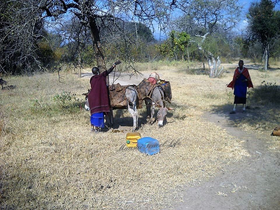 Delle donne maasai preparano i loro asini per andare lontano a cercare dell'acqua