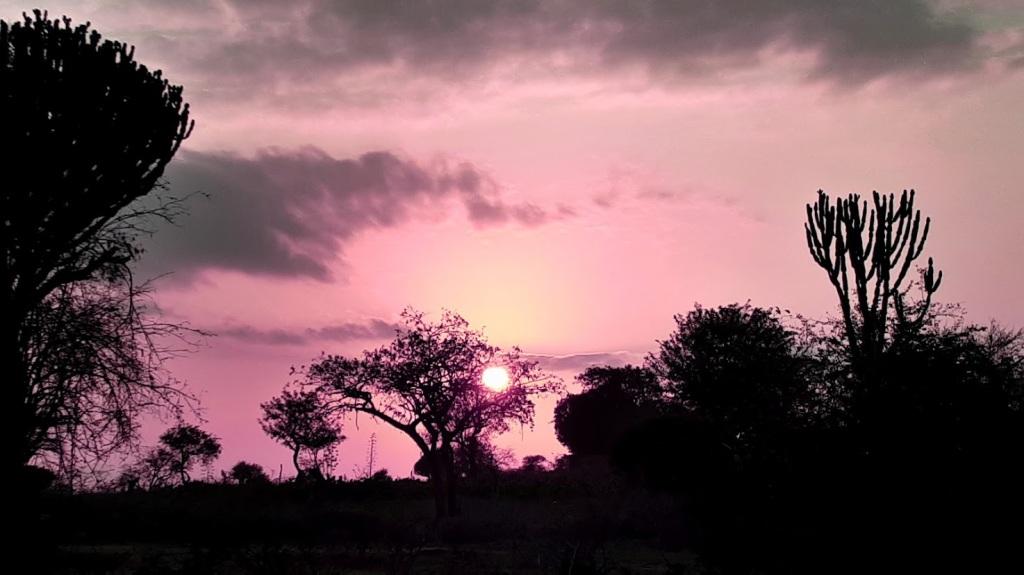 Alba in savana (Tanzania)